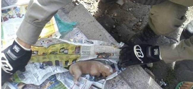 Filhotes de cães são jogados com vida em bueiro em Barra Mansa