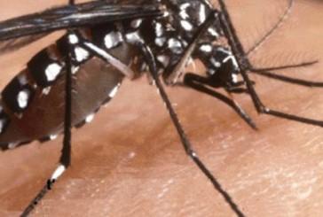 Peru, Tumbes: emergencia sanitaria por dengue, chikungunya y malaria