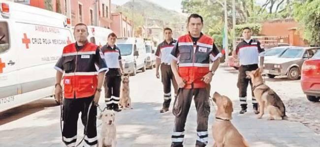 México: Rescatistas de cuatro patas entrenados para situaciones difíciles