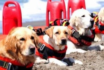 Cães viram salva-vidas nas praias da Itália
