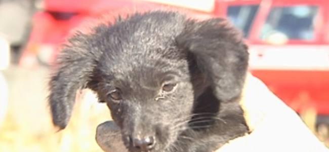 Bombeiros de Rio Preto salvam filhote de cachorro preso em incêndio