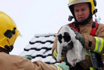 Galeria de imagens mostra bombeiros durante o resgate de gatos