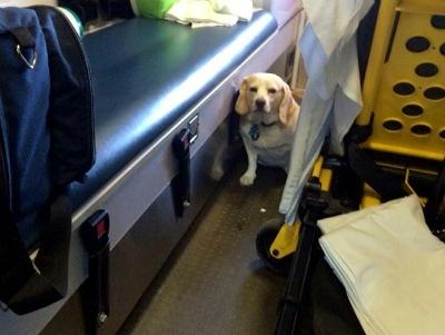 Amor incondicional; perro sigue ambulancia que transportaba a su dueño