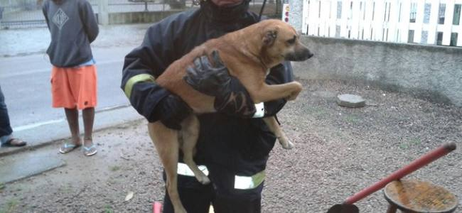 Bombeiros resgatam cão preso em tubulação em Santa Catarina
