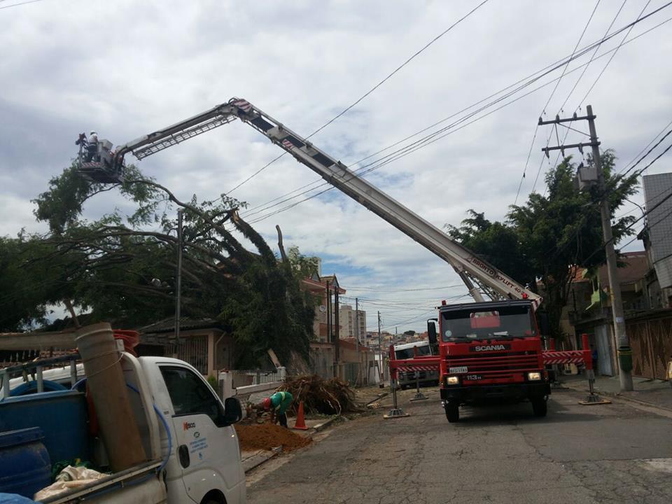 Bombeiros executam corte de árvore na zona sul de SP