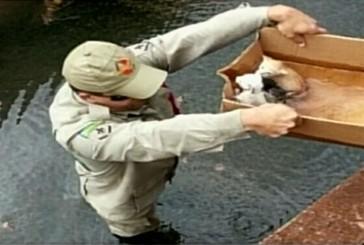 Bombeiros salvam filhotes de gatos em córrego