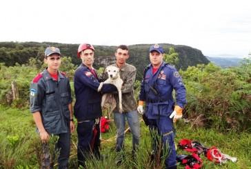 Bombeiros resgatam cão que caiu em penhasco em SC