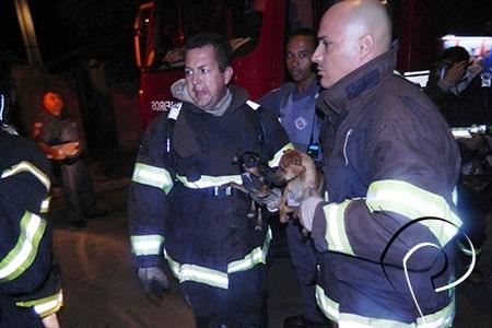 Bombeiros salvam cães de incêndio no interior de São Paulo