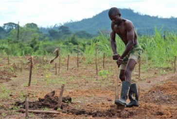Ebola en Sierra Leone : une tendance inquiétante