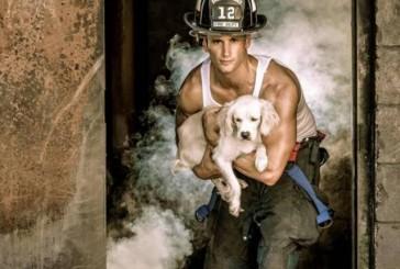 Bombeiros posam para calendário em prol de cães abandonados