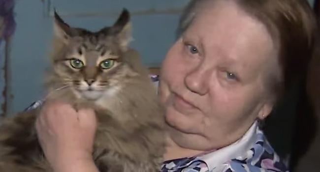 La heroica gata que salvó a un bebé abandonado