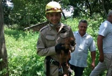 Bombeiros resgatam cão em fosso em Uruaçu, GO