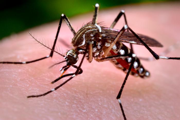 Honduras: Atestadas salas de dengue y chikungunya