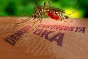 Zika : un tiers de l'humanité à risque !