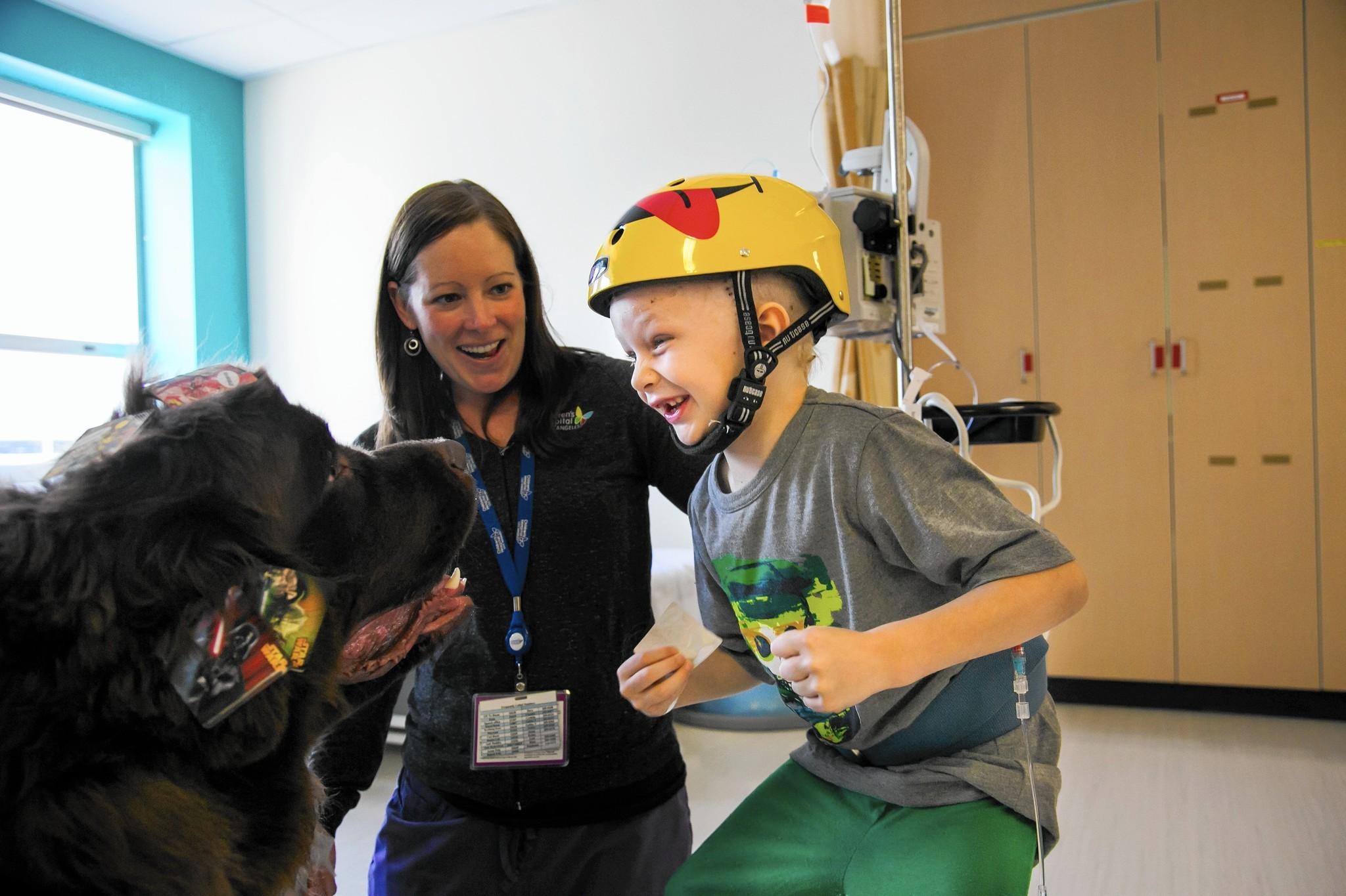Hospital de Heredia incorporará perros para ayudar pacientes