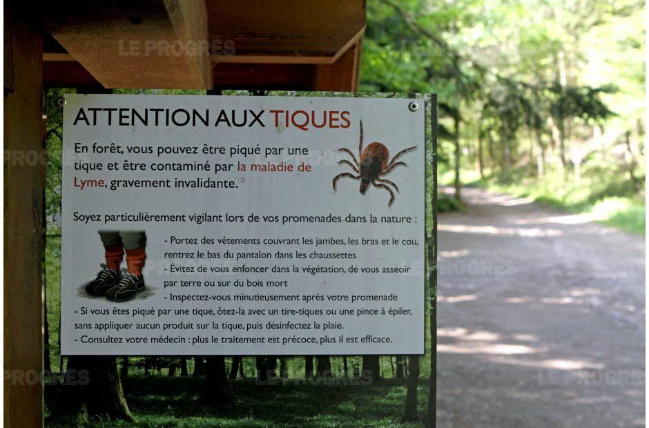 Maladie de Lyme, faut-il avoir peur ?