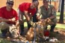 Bombeiros de Goiás resgatam cadela e sete filhotes presos em bueiro