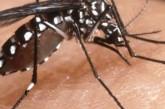 Chikungunya a Roma: cosa sapere e perché andare a donare sangue è molto importante, adesso