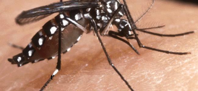 Zanzara tigre: cosa fare perché non sia un'emergenza?