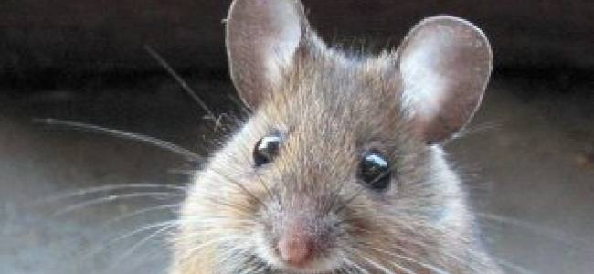 20141113173317-mouse-21[1]