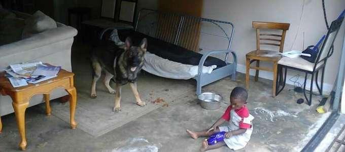 Si fa sparare al posto loro: cane-eroe salva mamma e bambino