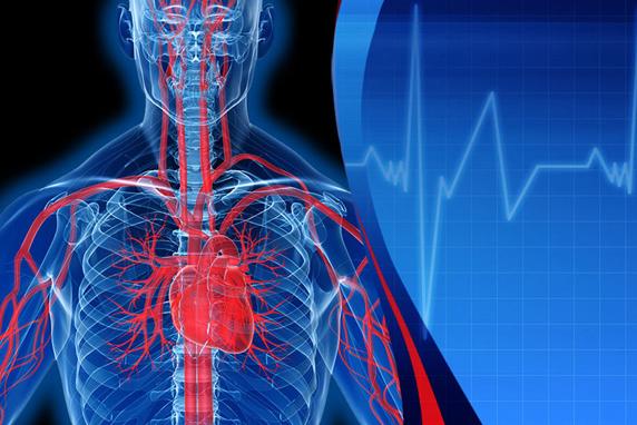 heart_circulation