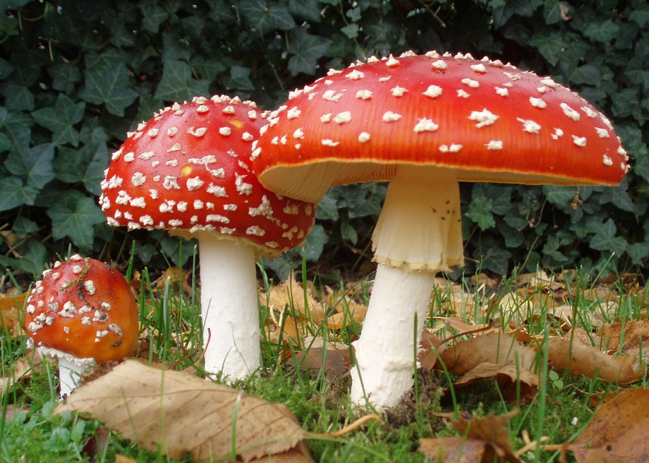 Il trattamento delle intossicazioni: funghi, fumo, piante o agenti chimici
