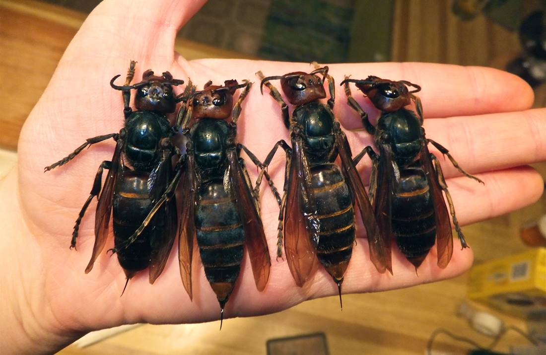 TSSA – Riconoscere e trattare punture di insetto, reazioni allergiche, e morsi di animali