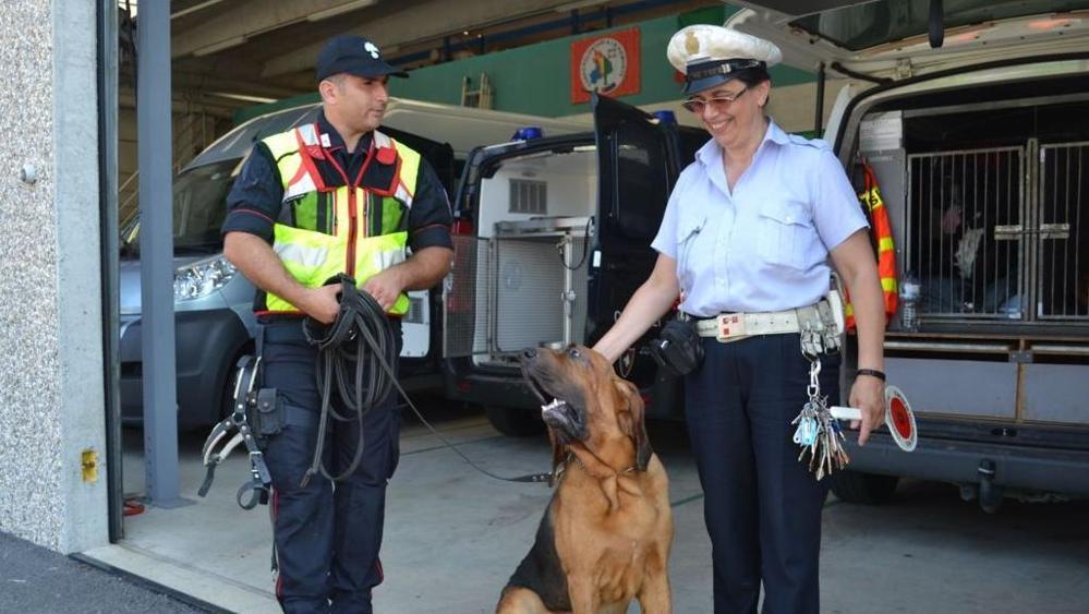 Esercitazione cinofila a Bellinzago – I cani salvavita arrivano anche dall'estero