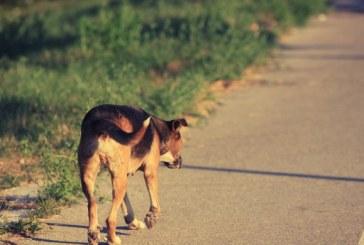 Protezione degli animali: Volontari di soccorso e Polizia di tutto il mondo vengono troppo spesso lasciati soli