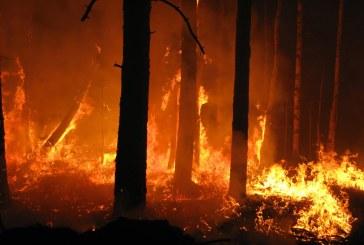 Incendi boschivi – Oggi 15 richieste di intervento aereo