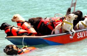 300px-Cani-da-salvataggio-in-acqua