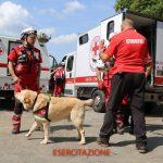 SPRINGSTAGE 2018: chiusa domenica scorsa la 7° edizione del campo scuola dedicato all'emergenza della CRI Firenze   Emergency Live 9