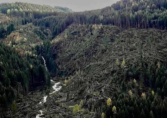 maltempo alberi