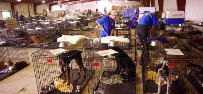 20140708174152-pet_shelter_disaster_response650
