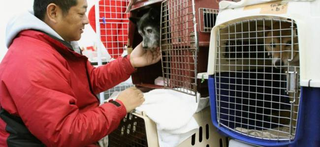 Pet Shelters during Disasters and Emergencies (part 2)