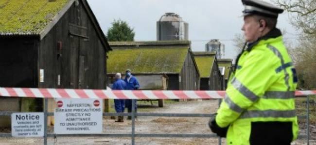 Bird Flu comes to Britain