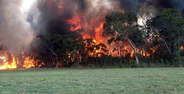 How to prevent wildfires? The Australian Guidelines for burning vegetation