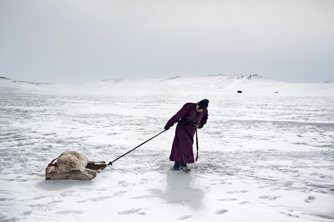 Red Cross launches emergency appeal as extreme winter 'Dzud' threatens Mongolian herders