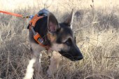 A glimpse in the life of a search and rescue puppy
