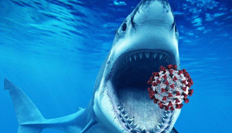Illustration of a shark eating a giant Coronavirus