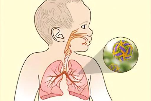 virusi respiratori)